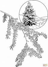 Hemlock Tree Coloring Eastern Pages Canadian Drawing Supercoloring Dot sketch template