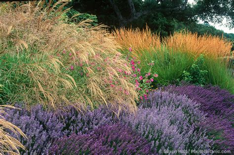 Lavendel diät
