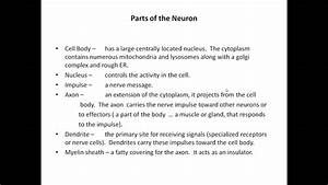 Motor Neuron Structure And Function