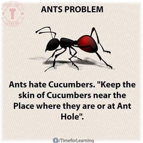 Pin by Leslie Mclean on Home Remedies | Ant problem, Ants ...