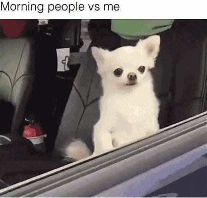 Funny Memes Meme Gifs Everyday Relate Chihuahua