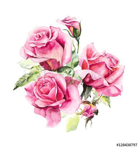 rosebush pattern  pink rose wedding drawings