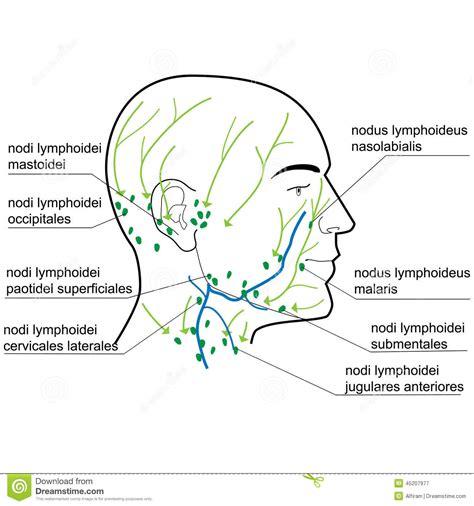 Colitis ulcerosa - wikipedia
