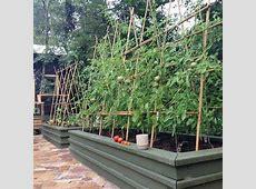 The Best Tomato Trellis & Tomato Cages ~Family Food Garden