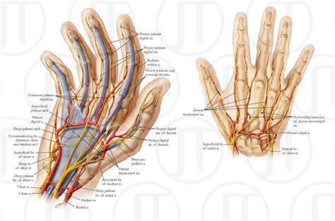 Finger Laceration