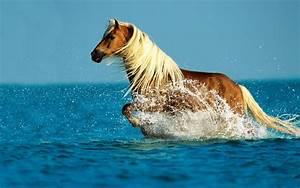 Wallpaper water, horse, splash, running, Horse running on ...