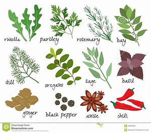 Vector herbs and spices stock vector. Illustration of ...