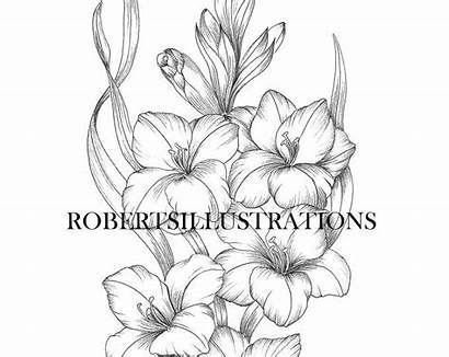 Larkspur Flower July Birth Tattoos August Colouring