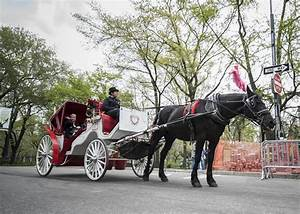 Central Park Auto : horse carriage is better ride than electric car magazine ny daily news ~ Gottalentnigeria.com Avis de Voitures