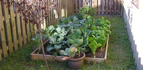 What To Plant In Your Winter Vegetable Garden (pacific
