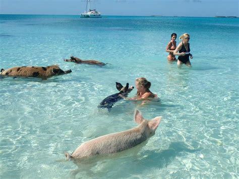 paradise life  blog swimming pigs bahamas