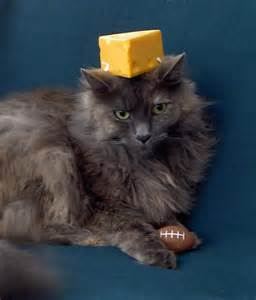 cheese cat cheese cat images
