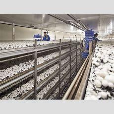 Schweizer Pilze Können Sich Trotz Hoher Preise Behaupten