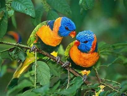 Birds Worlds Bird Rainbow Pretty Parrots Colorful