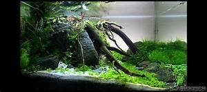 Aquarium Berechnen : under a tree flowgrow aquascape aquarien datenbank ~ Themetempest.com Abrechnung