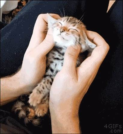 Massage Getting Cat Face Happy Natural Mind