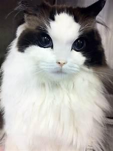 prettiest cat in the world | Tumblr