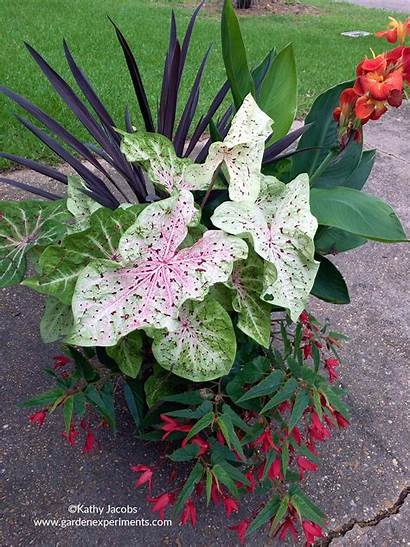 Tropical Container Plants Garden Summer Planter Planting