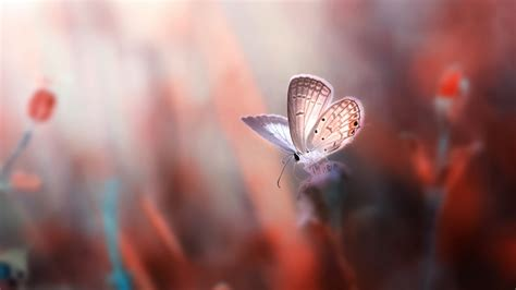 Blue Space Background Hd Wallpaper Butterfly Animals 7421