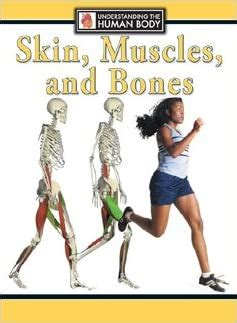 There are 206 bones in the human body. Amazon.com: Skin, Muscles, and Bones (Understanding the Human Body) (9780836842074): Steve ...