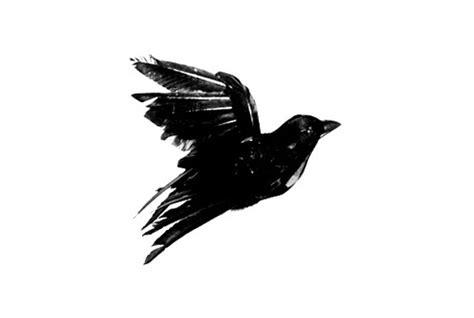 blackbird flying illustration byebyeblackbird