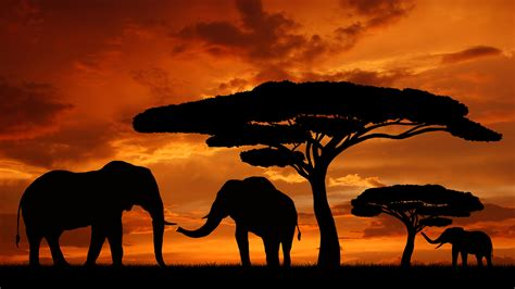 elephant silhouette sunset painting pin sunset cake on