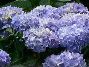 Garten Pflanzen : garten pflanzen ~ Eleganceandgraceweddings.com Haus und Dekorationen