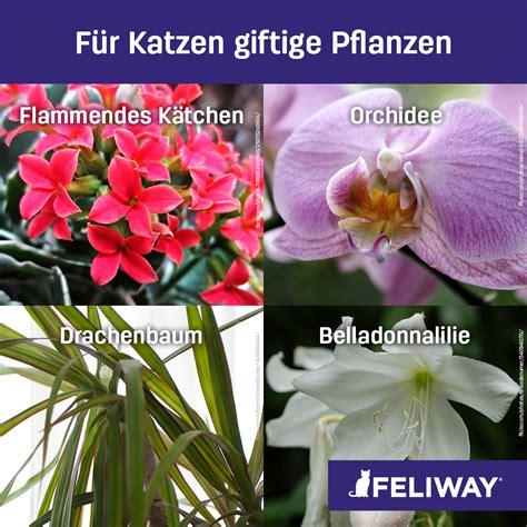 Pflanzen Für Katzen Geeignet by Welche Zimmerpflanzen Sind F 252 R Katzen Geeignet Katzen