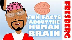 Fun Facts about the Brain for Kids: Interesting facts ...
