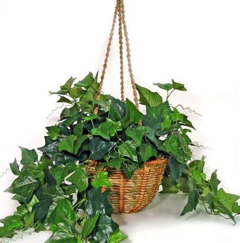 plante pour chambre à coucher 8 plantes pour votre chambre à coucher pour vous aider à