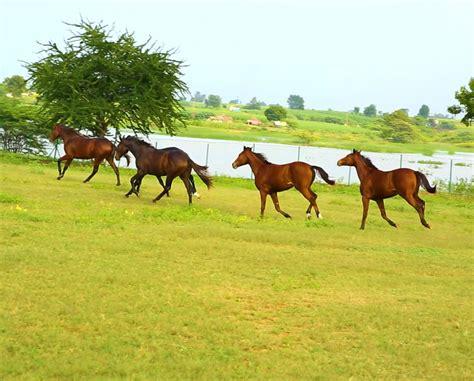 horse breeding quality stud