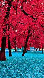 beautiful trees pictures photos and images for