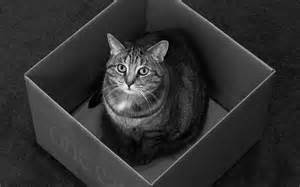 cat in the box a revolution in science the quantum activist