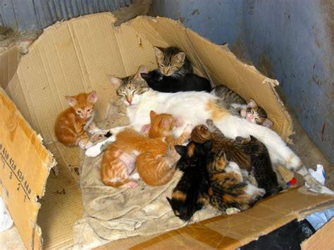 combien de portee par an pour un chat une port 233 e de chatons le r 232 gne animal de fanfan