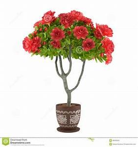 Grünpflanzen Im Topf : rote rosen im topf blumen stock abbildung bild von ~ Michelbontemps.com Haus und Dekorationen