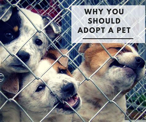 National Adopt A Shelter Pet Day, Adopting A Dog, Shelter Animals Needs Homes