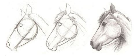 horse drawing  beginners
