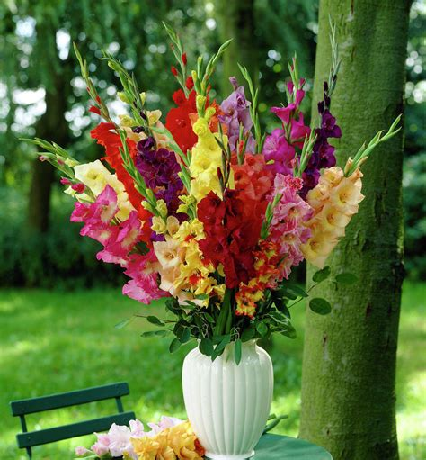 best flower bouquets flower of the month gladioli flowers