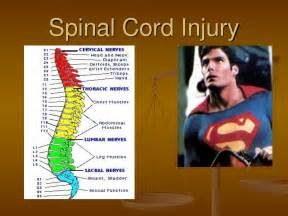 Spinal Cord Injury Levels Spinal cord injury Spinal Cord Injuries