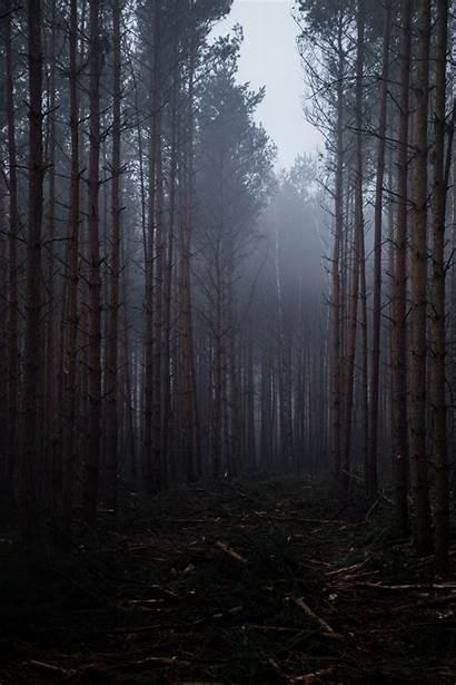 Portrait Nature Display Forest Wallpapers Desktop Landscape