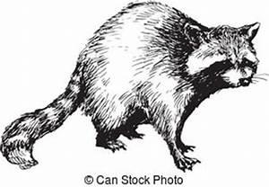 Nature racoon Clip Art Vector Graphics. 67 Nature racoon ...