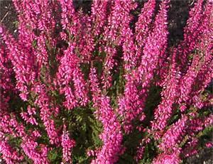 Kübelpflanzen Winterhart Schattig : winterharte k belpflanzen schattig k belpflanzen f r den ~ Michelbontemps.com Haus und Dekorationen