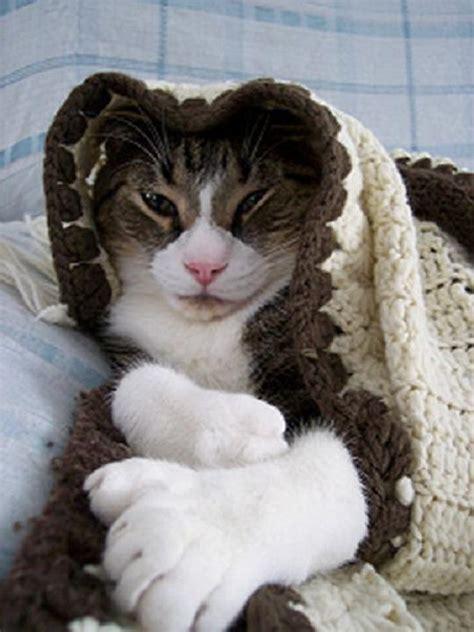 healthiana polydactyl cats