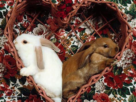 jerome bureau fond d 39 écran de lapin un amour de lapins