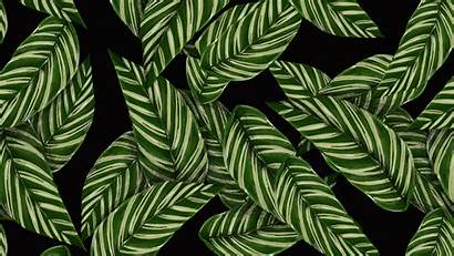 Texture Patterns Leaves Background Wallpapers 4k Uhd