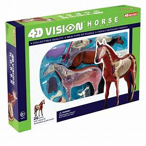 4d Vision Horse Anatomy Model In 2020