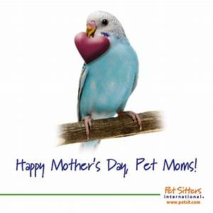5 Ways to Use Mother's Day to Promote Your Pet-Sitting ...