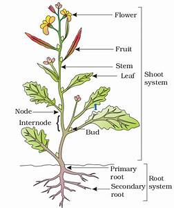 Part And Diagram Of Plant - Science -