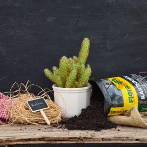 kakteenerde selber mischen schildl 228 use erkennen vorbeugen bek 228 mpfen plantura