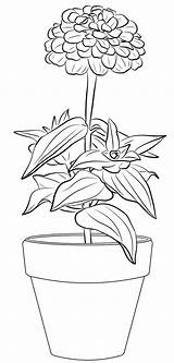 Zinnia Coloring Pot Flower sketch template